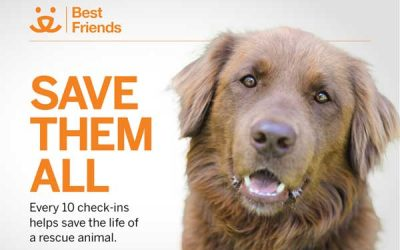 February Check In – #SaveThemAll